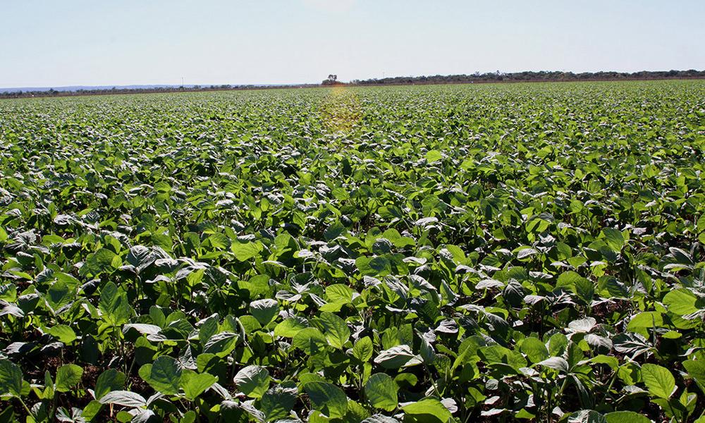 No Tocantins, o Agro se destaca e mostra força em 2020